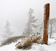 Survival (Taken at Mt. Baldy, 30 Miles from Los Angeles) by Steve  Buffington