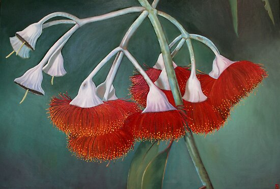 flowering gum (Silver Princess) by vian