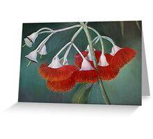 flowering gum (Silver Princess) Greeting Card