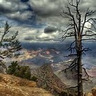 The Raven&#x27;s Perch by Diana Graves Photography