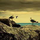 Seagulls by ajgosling