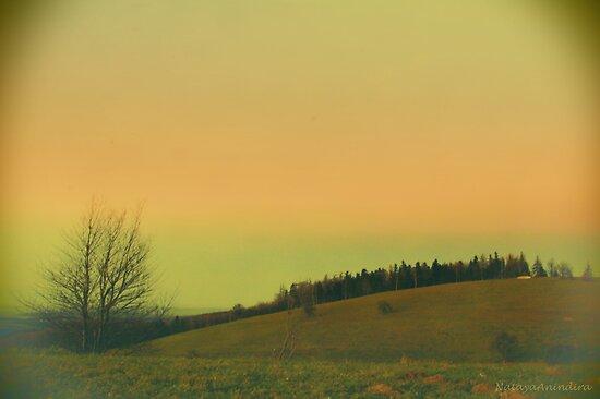 green to orange view by picontagious
