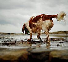 A walk on the rocks by { wetnosefotos.com  }