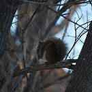 Crouching Squirrel, Hidden acorn by Brenden Bencharski