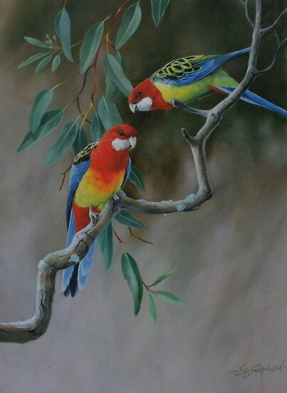 Easter Rosellas by eric shepherd
