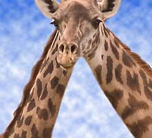 """Two Necks Are Better Than One"" - giraffes by John Hartung"