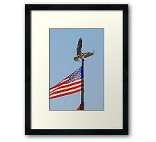 """Living Statue"" - an osprey lands on flap post Framed Print"