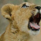 Lion Cub in Zimbabwe by Daniel Mulcahy