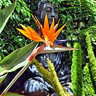 Bird of Paradise - Strelitzia reginae  by Clive