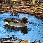 Teal on the river by JanSmithPics