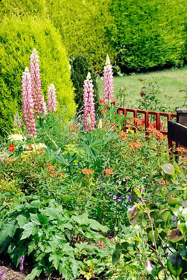 Pink Lupin Flowers by Chris L Smith