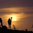 Pushkar Sunset by Neville Bulsara