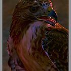Portrait Of A Hawk by Ray Wells