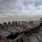 Dino on the beach by Elma Claassen