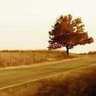 Lone Tree  by Michael  Herrfurth