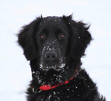Sota In The Snow by swaby