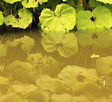Tranquil river greens by bared
