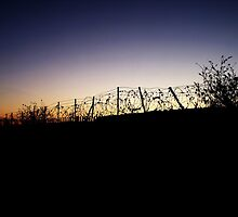 Barbed Wire Silhouette by illman