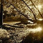 River Sun by Michael  Herrfurth