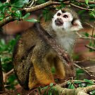 Squirrel Monkey by Winston D. Munnings