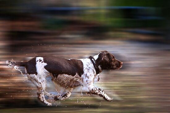 Max in  Motion by Paul Alsop