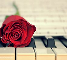 Red Rose on a Piano by VioletKashi