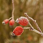 Winter Berries by Elaine123