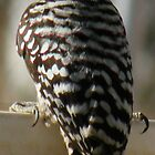 Ladderback Woodpecker by Winona Sharp