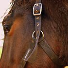Bridle by Stan Owen