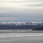 Arctic Peace. by Sarah Jane Bingham