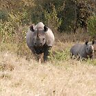 Black Rhino with calf.. by CriscoPhotos