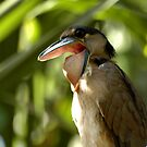 Costa Rica - Boat billed heron by Marieseyes
