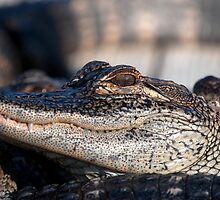 I am Smiling says the Alligator to the Photographer by imagetj