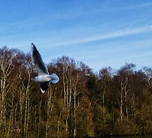 Flight Path by Colin Metcalf