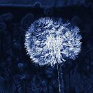 Dandelion Lines by Samantha Higgs
