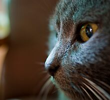 The Feline Persuasion by kraMPhotografie