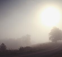 Mornings Lights by Samantha Frey