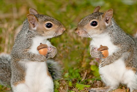 acorns and squirrels