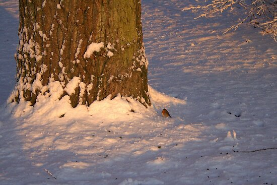 Little Robin in the Snow by Jo Nijenhuis