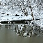 Winter Reflections by Laurel Talabere