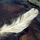 One White Feather by Hazel Dean