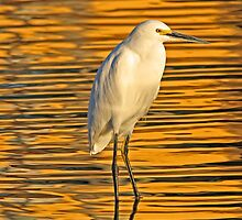 Golden snowy egret by jozi1