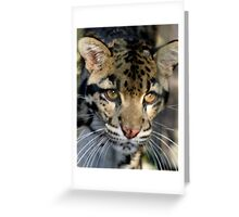 Clouded Leopard at Lowry Park Zoo Greeting Card
