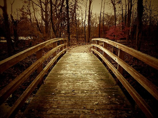 The Bridge by Michael  Herrfurth