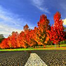 Autumn Road HDR. by Petehamilton