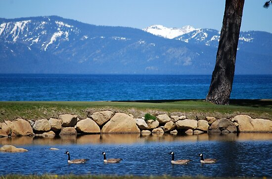 Edgewood Golf Course - Lake Tahoe by MaryLynn