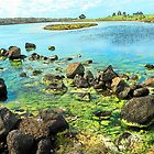 Rock Pools, Griffin Island, Port Fairy by Pam Amos