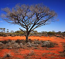 Outback Tree by Hans Kawitzki