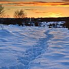 Winter Sunset, Waldridge Country Park, Durham. UK by David Lewins