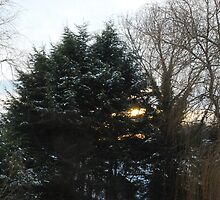 Sun, Snow and Trees by babibell